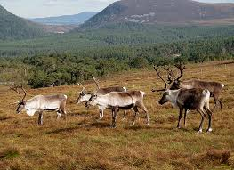 UK static caravan holidays near the Cairngorms